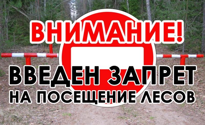 В Свердловской области введено ограничение на посещение лесов из-за опасности новых природных пожаров